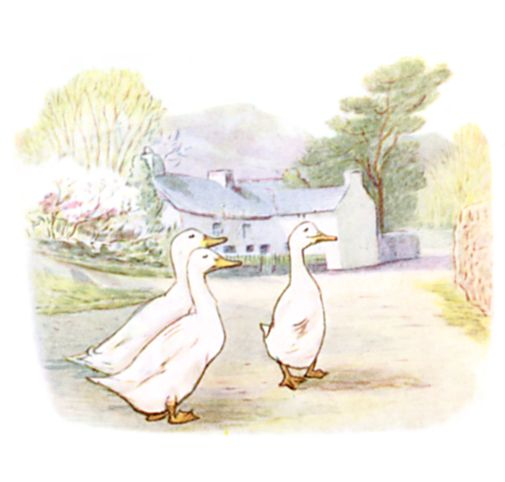 The Puddle-Ducks