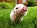 Piglet sniffing
