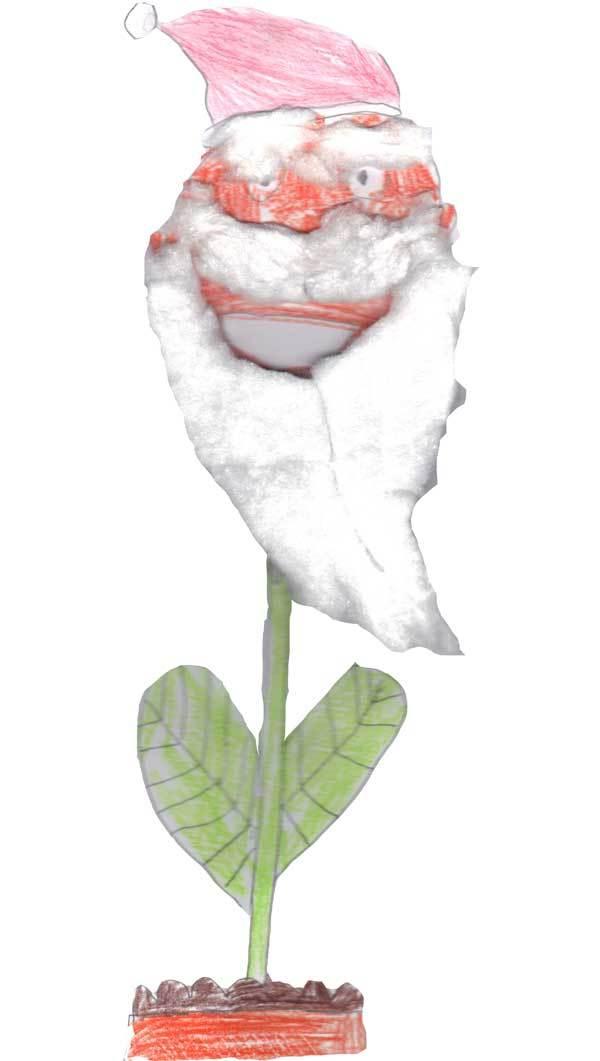 The Santa Flower