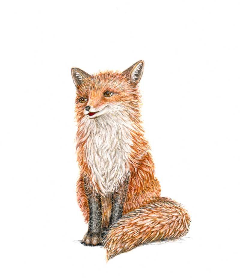 Franni fox