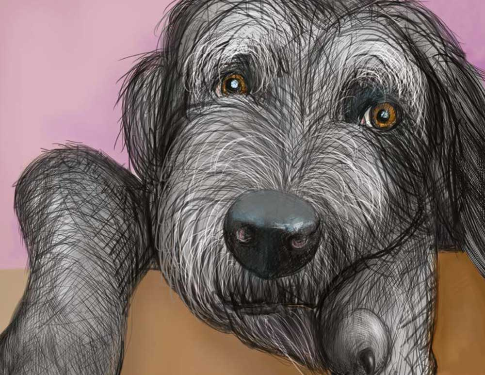 Piper the dog looking nervous by Rebekah Phillips