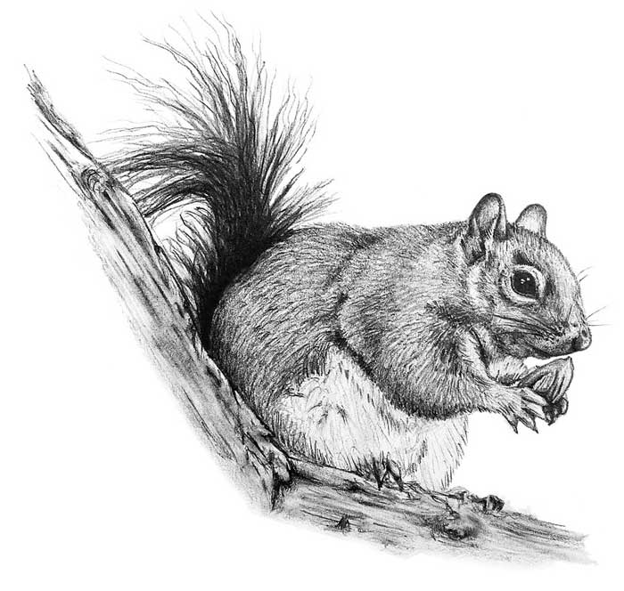 The Prize - illustration of a squirrel eating a nut