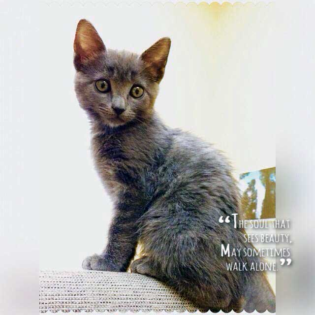 """cute cat picture with statement """"The soul that sees beauty may sometimes walk alone."""""""