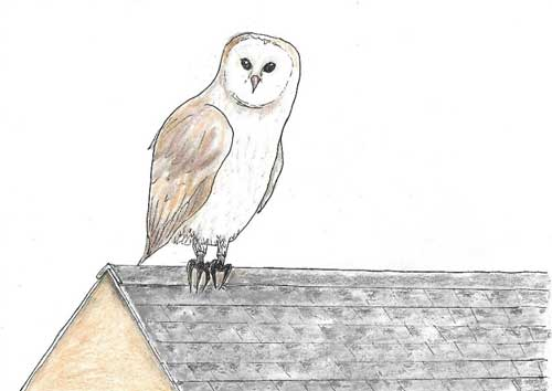Owl on roof