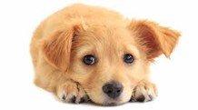 Small dog looking anxious