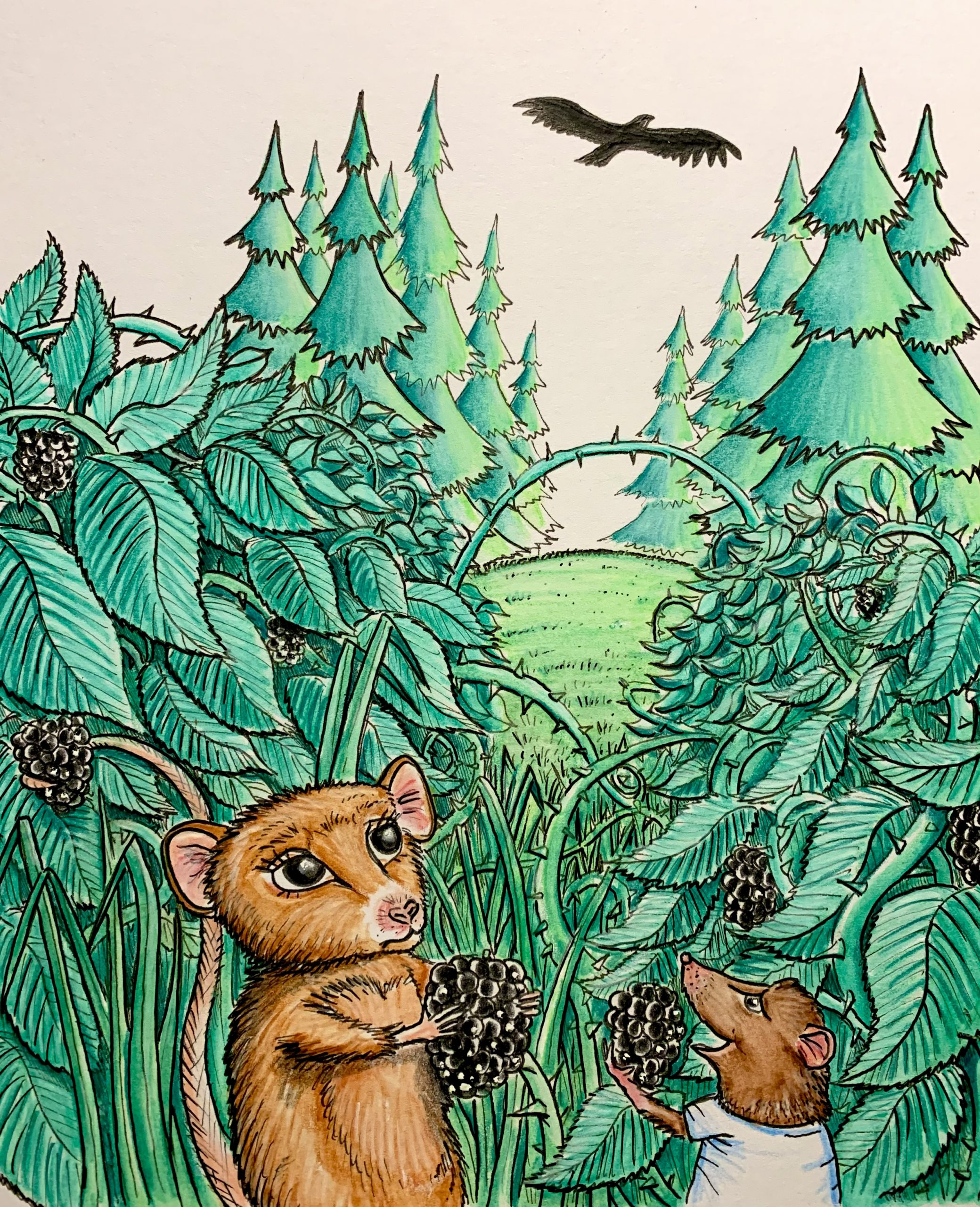 Dormice eating blackberries and hawk circling above
